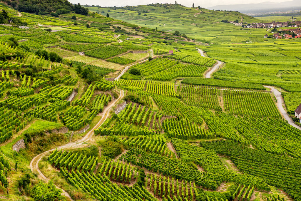 Vineyards in the Alsace wine region of France.