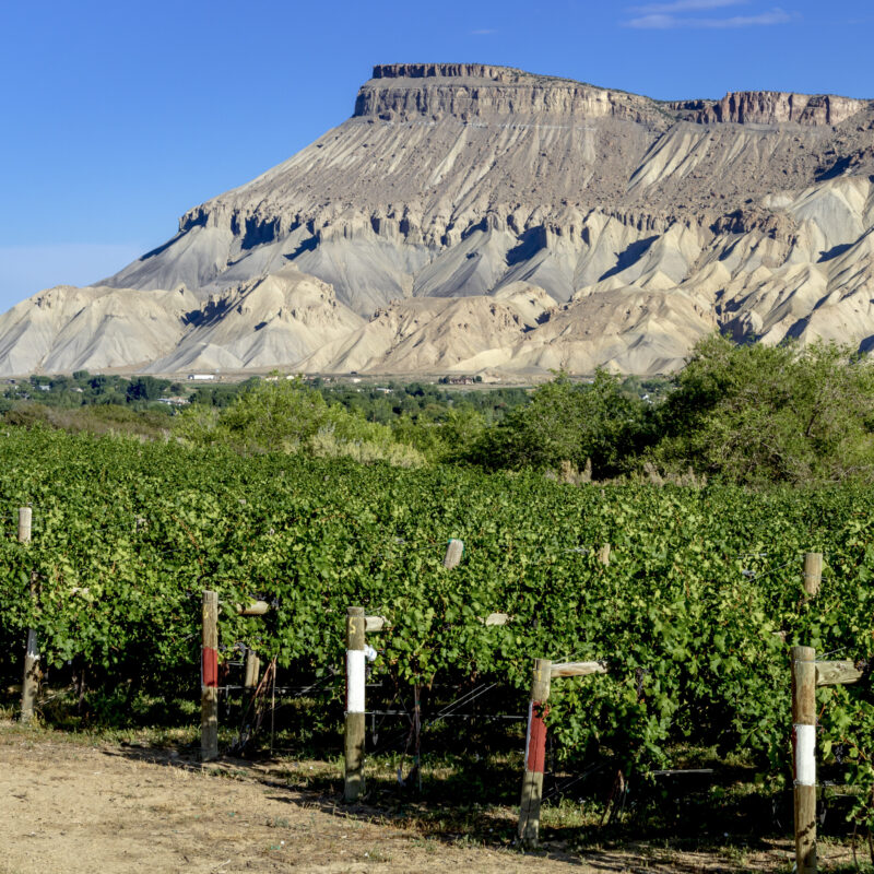 Vineyards in the town of Palisade, Colorado.