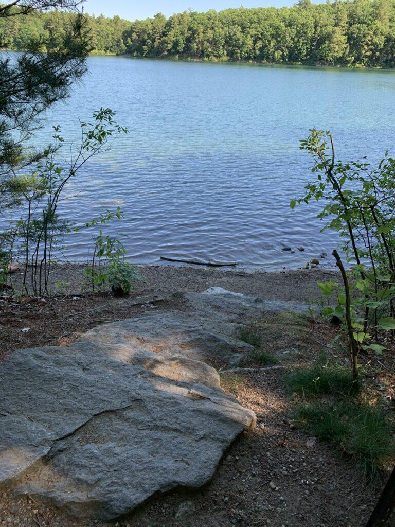 Walden Pond in the Walden Pond State Reservation.