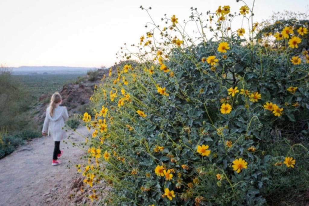 Walking the trails in Phoenix, Arizona.