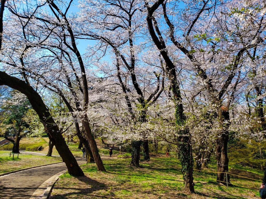 Walking through Yoyogi Park in Tokyo.