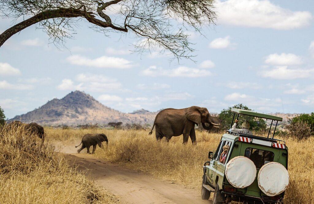 Watching elephants on a safari.