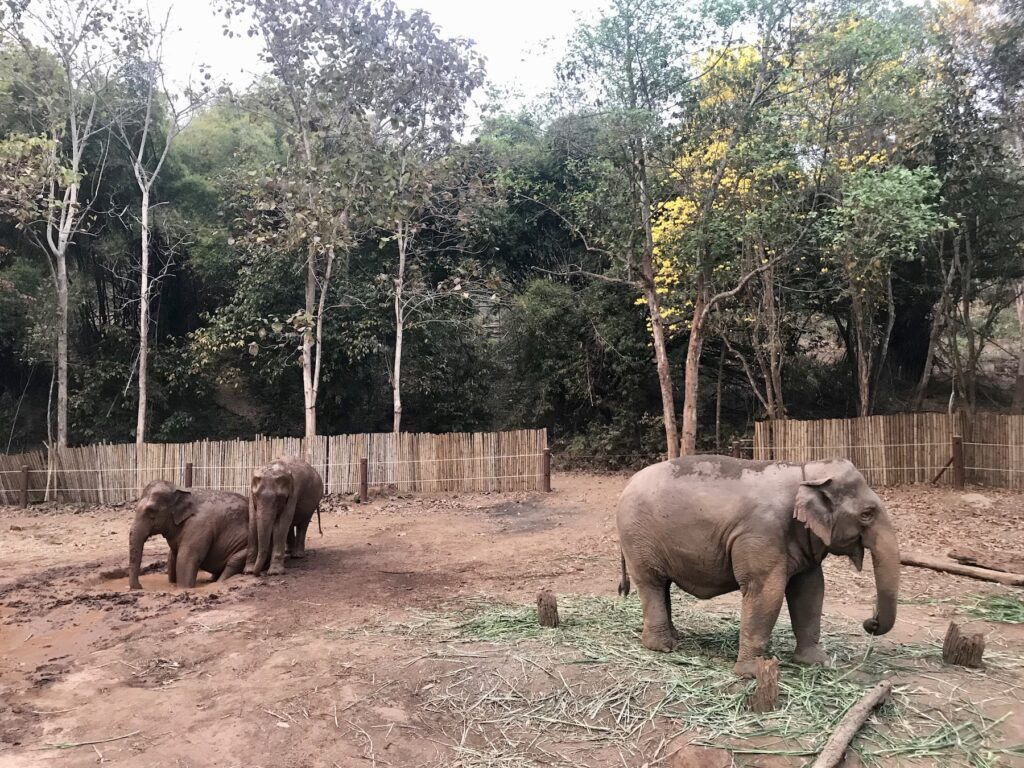 Watching elephants play in Thailand.