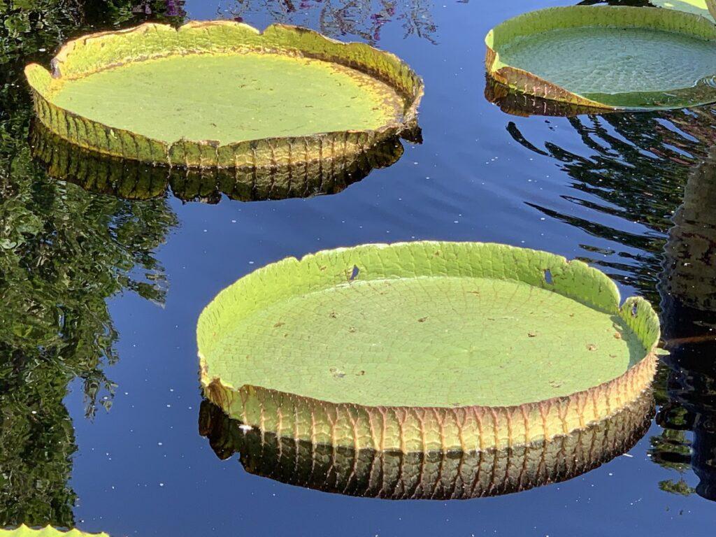 Water Gardens, Denver Botanic Gardens.