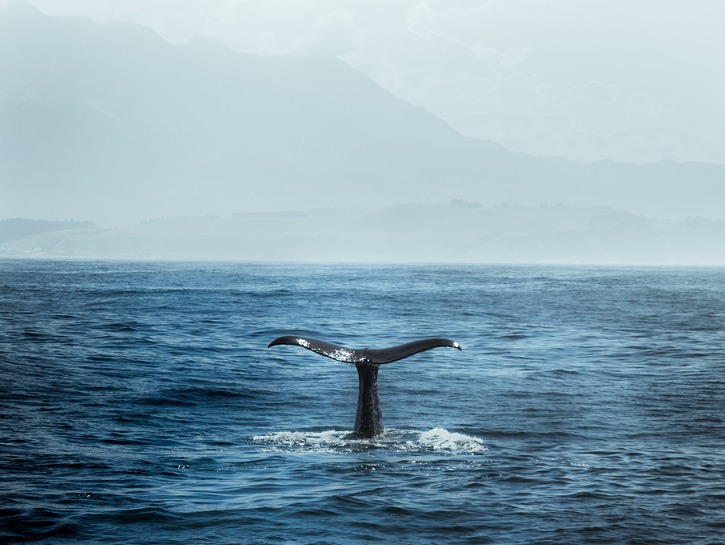 Whale tail sticking out of water