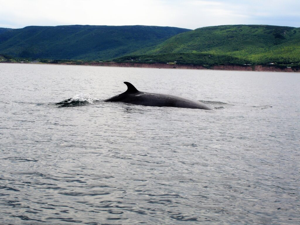 Whale watching at Pleasant Bay.