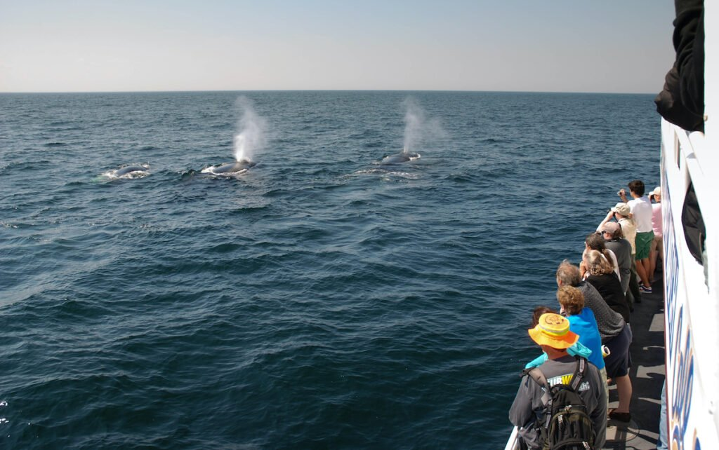 Whale-watching in New Bedford.