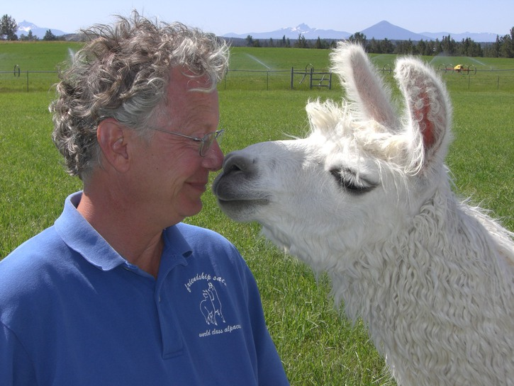 White llama kissing man
