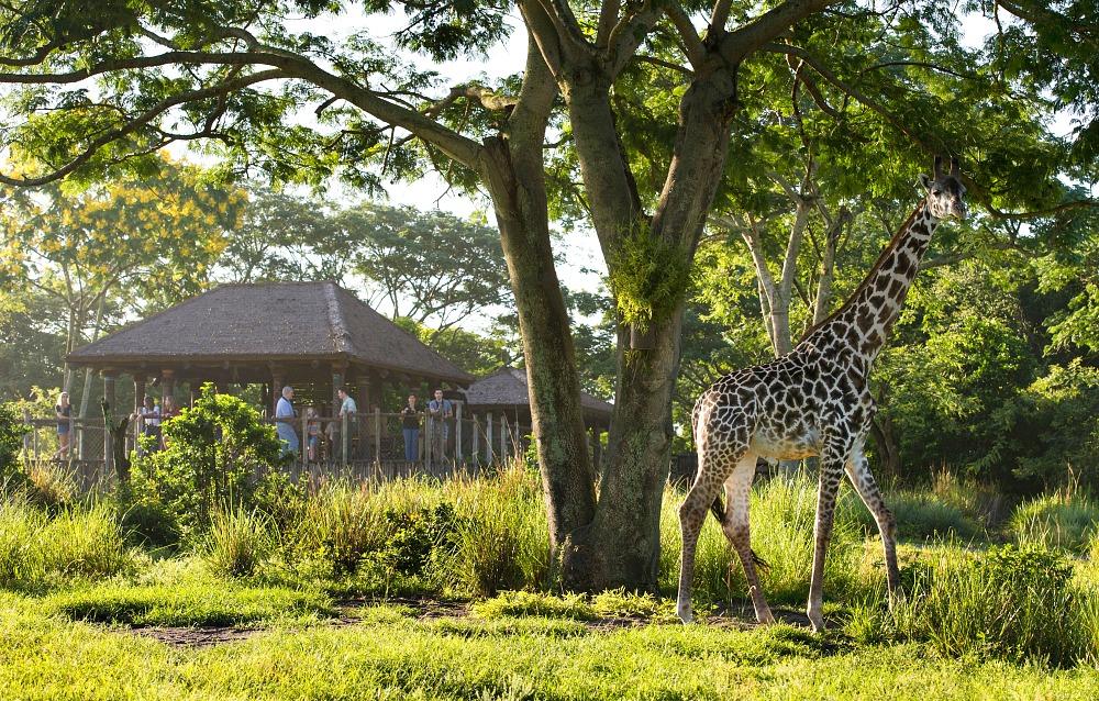 Wild Africa Trek at Disney World.