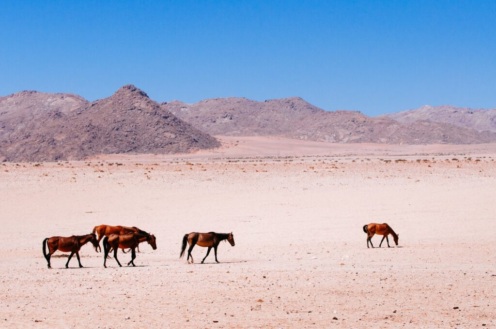 Wild horses in the deserts of Aus, Namibia.