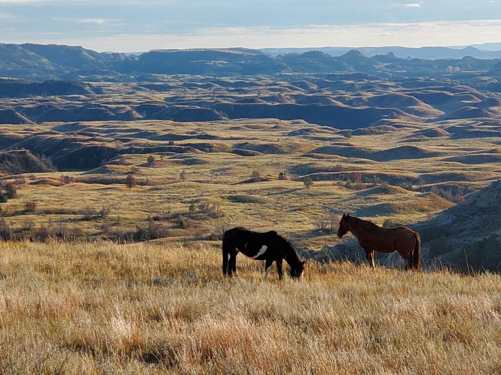Wild horses in Theodore Roosevelt National Park's South Unit.
