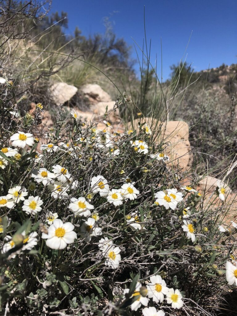 Wildflowers along the Lime Kiln Trail.