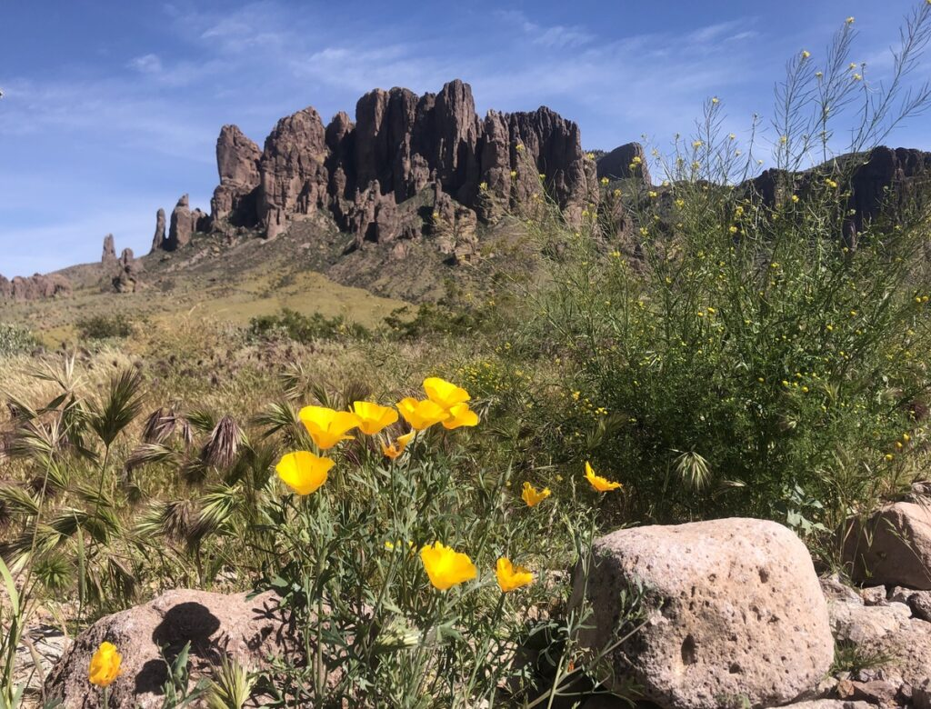 Wildflowers along the Siphon Draw Trail in Arizona.