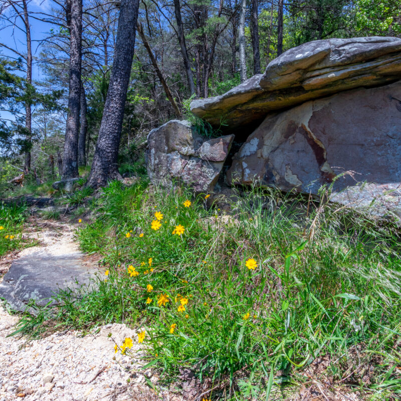 Wildflowers at Little River Canyon National Preserve in Alabama.
