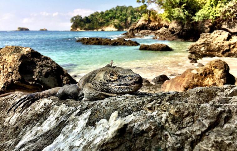 Wildlife and the coastline of Costa Rica.