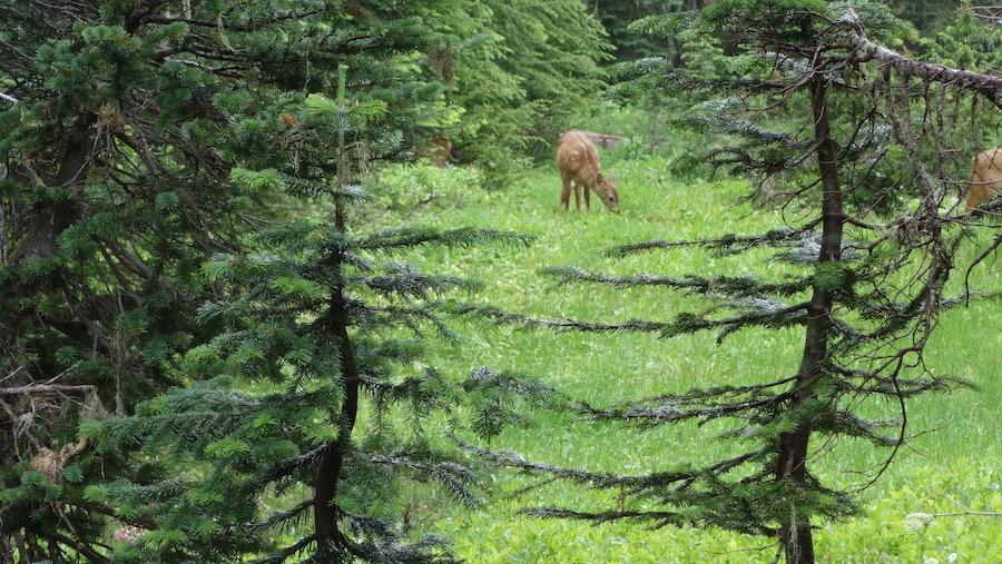 Wildlife in Mount Rainier National Park.