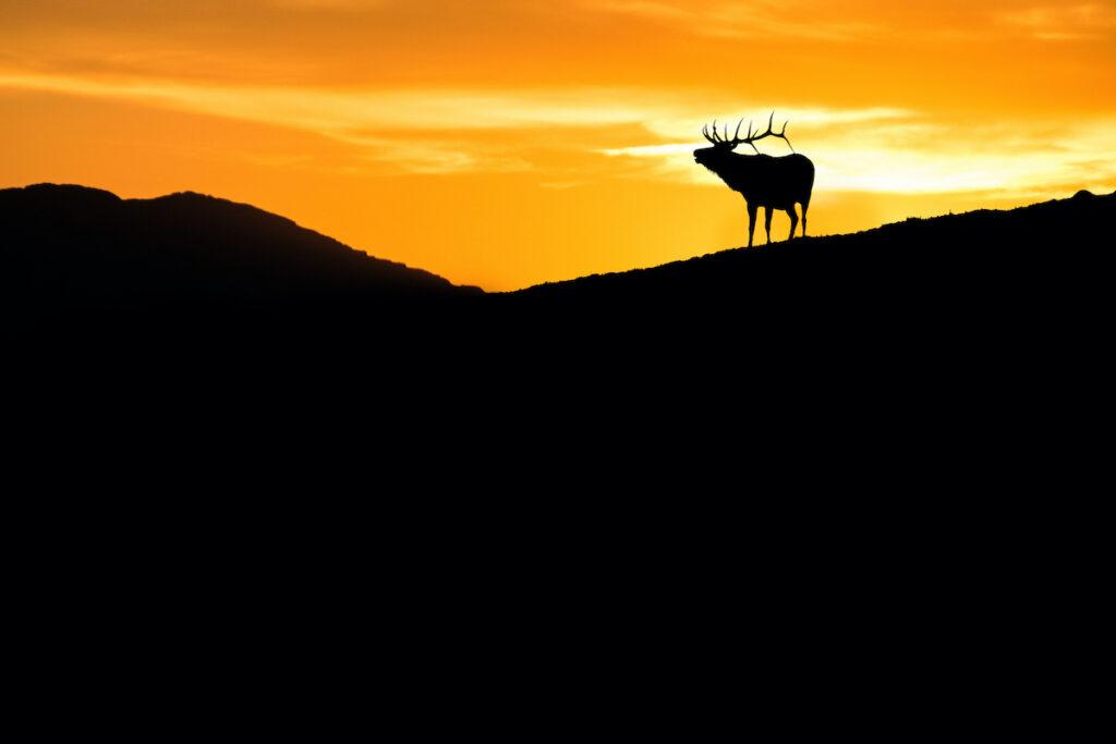 Wildlife on Colorado's Trail Ridge Road.