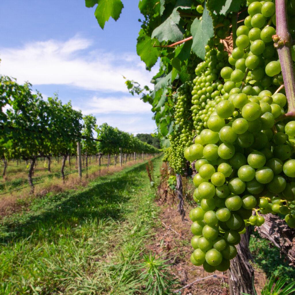 Williamsburg Winery.