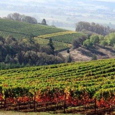 Yamhill Valley Vineyards in McMinnville, Oregon.