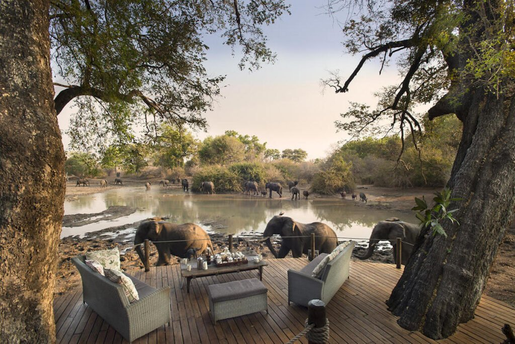 Elephants at Kango Camp in Africa.
