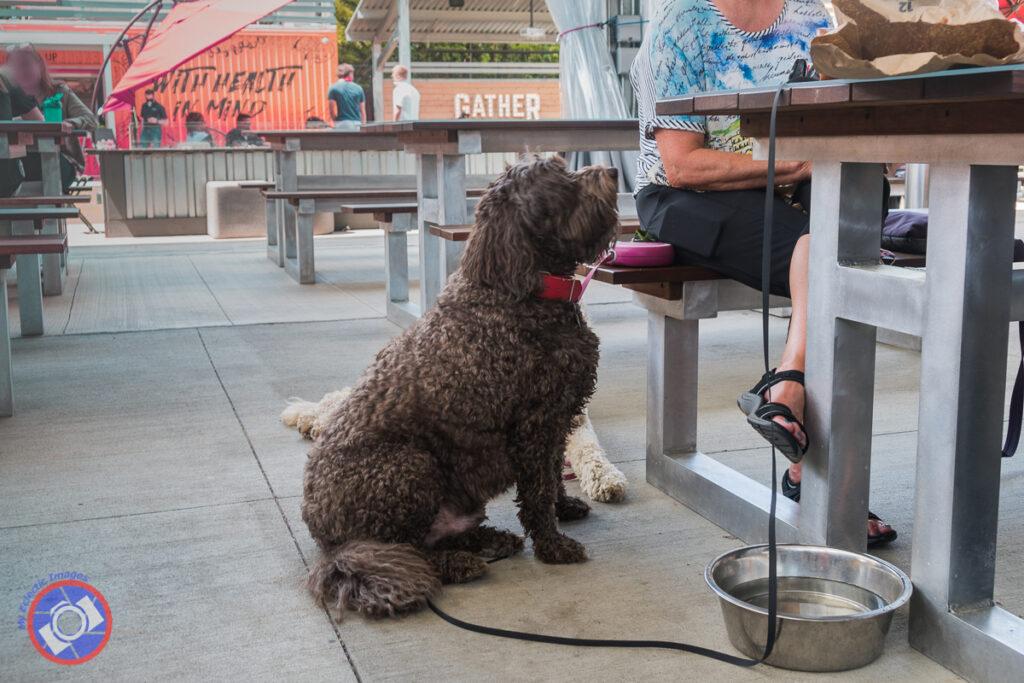 Gather GVL is dog friendly.