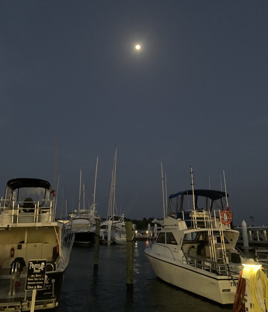 Boats in a harbor at night.