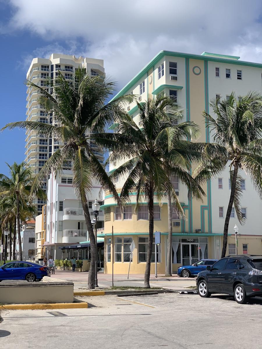 Palm trees in Miami, Florida.