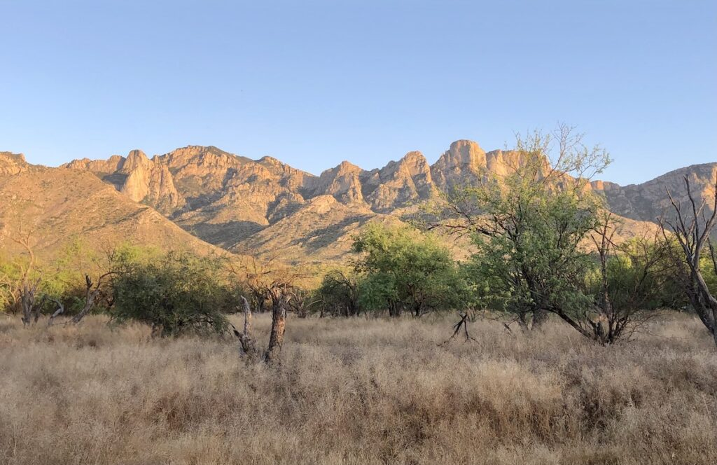 Trees and mountains in Catalina State Park.