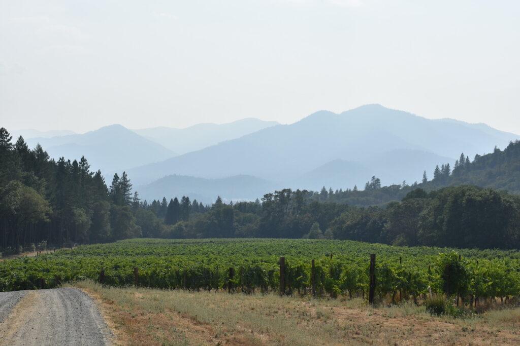 Touring the vines at Wooldridge Creek Winery.