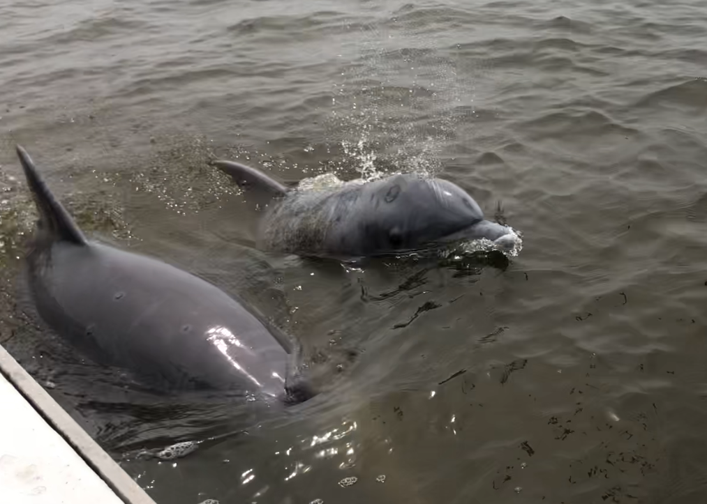 Dolphins near the boat