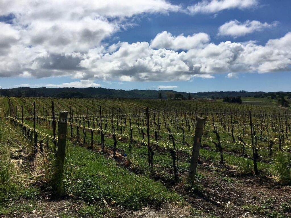 Vineyards outside San Luis Obispo.