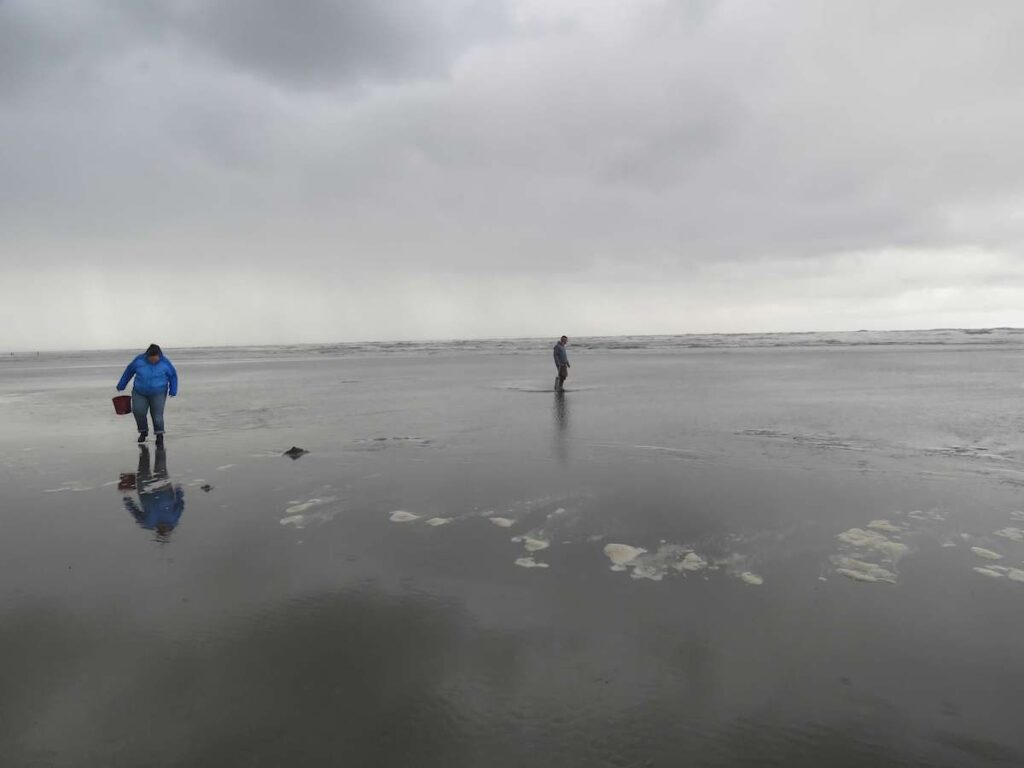 Two people clamming on Long Beach.