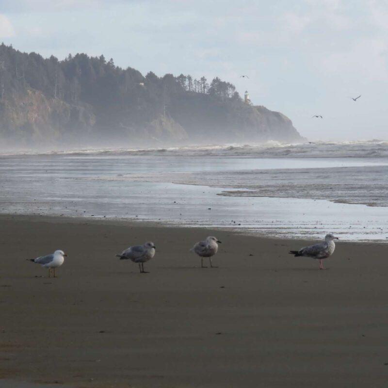 Seagulls at Long Beach, Washington.