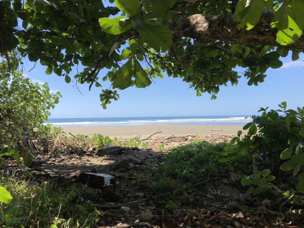 Tropical meets beach in Costa Rica.
