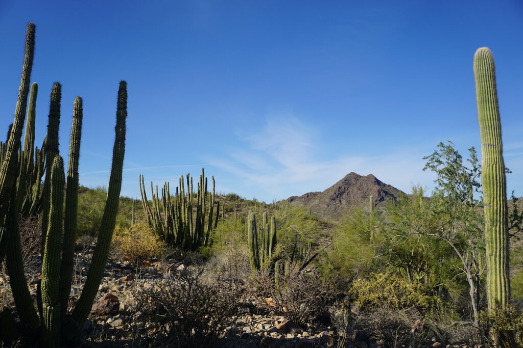 Hiking Organ Pipe Cactus National Monument.