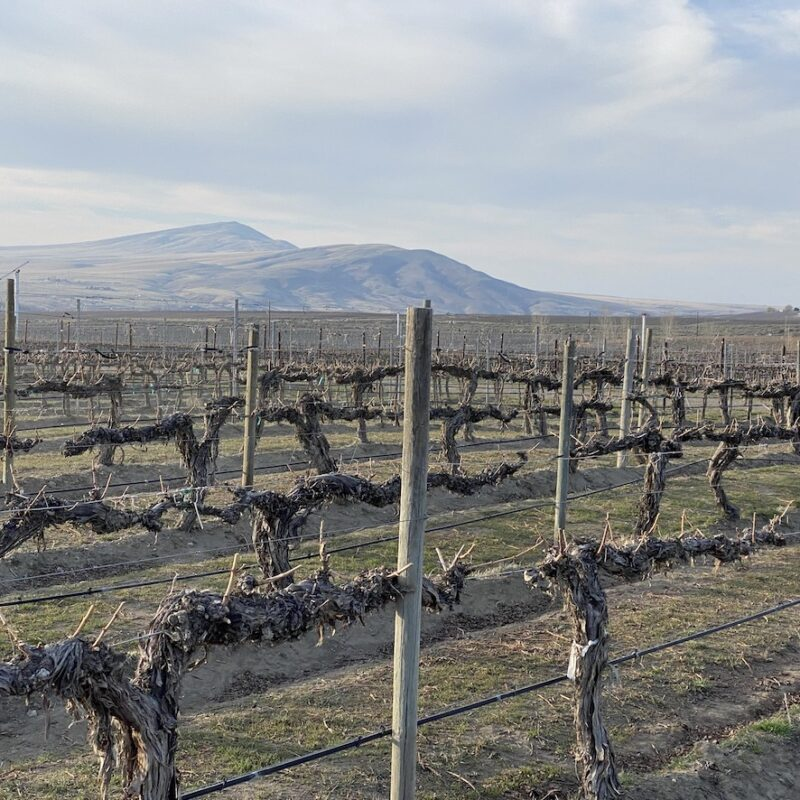 Red Mountain Vineyards.