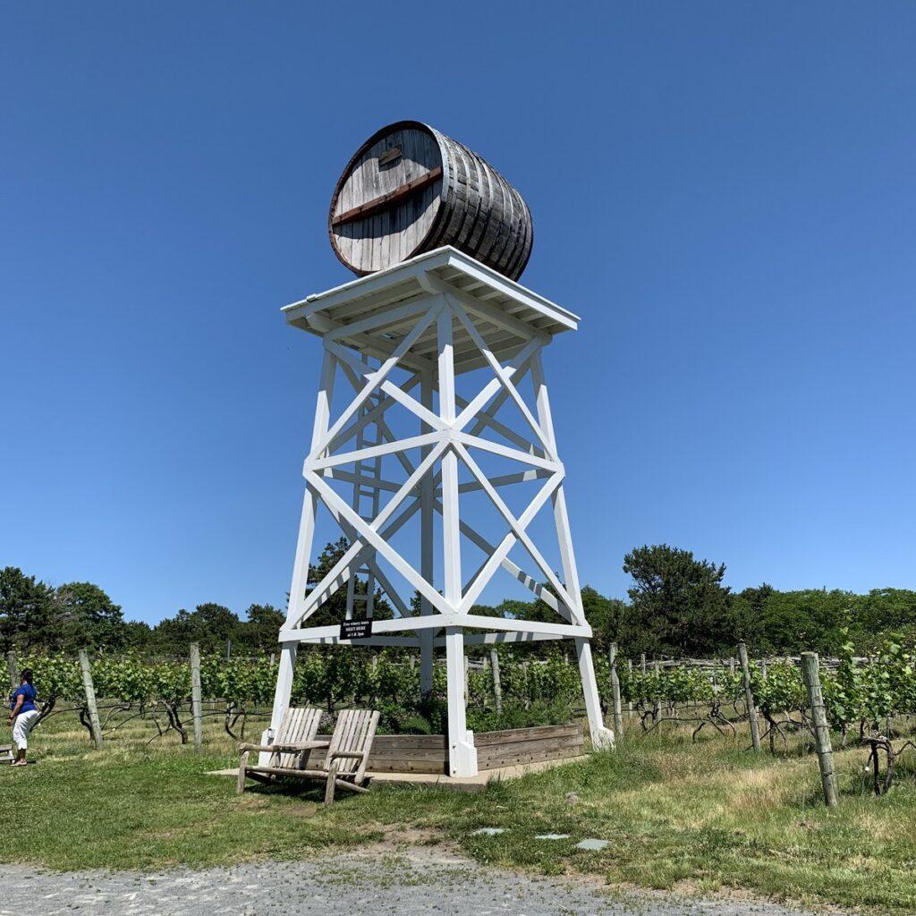 Vineyard in Truro.