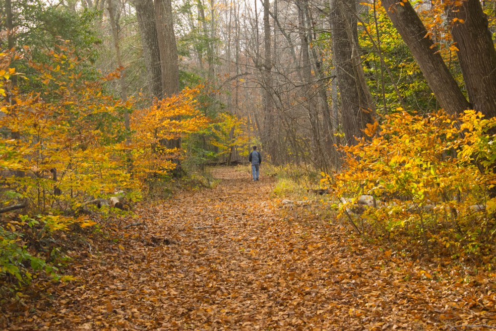 Man Hiking in Prince William Forest Park