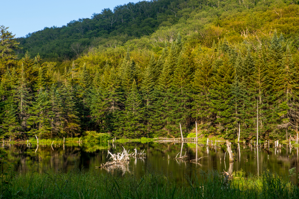 A beaver pond on the edge of Camel's Hump State Park in Duxbury, Vermont.