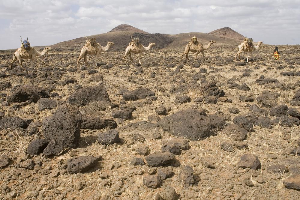 Caravan of camels, Chalbi Desert, Kenya.