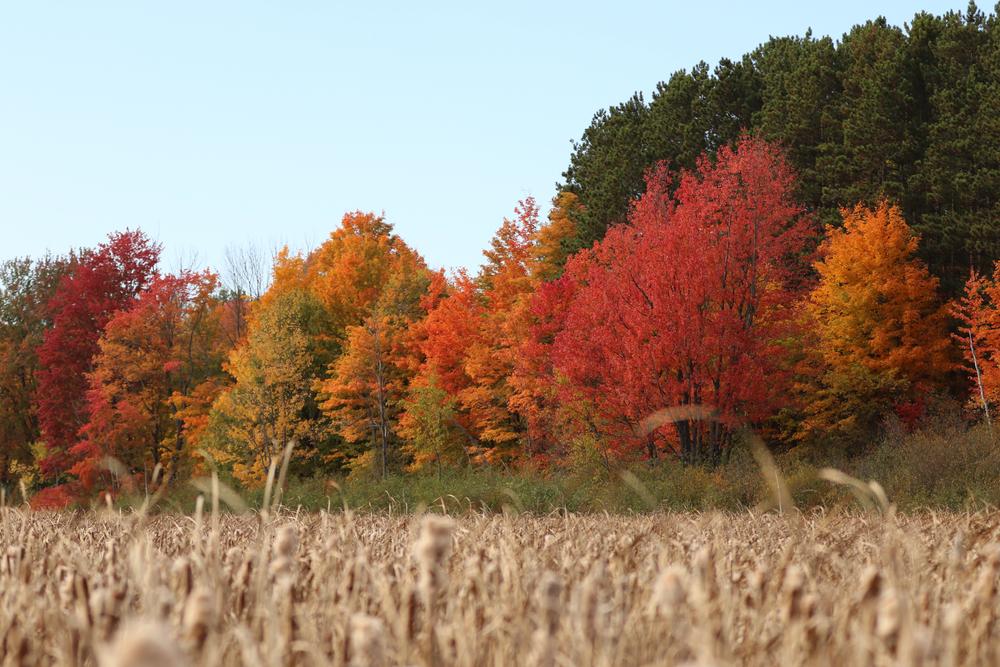 Fall colors at Mer Bleue Bog, Ottawa.
