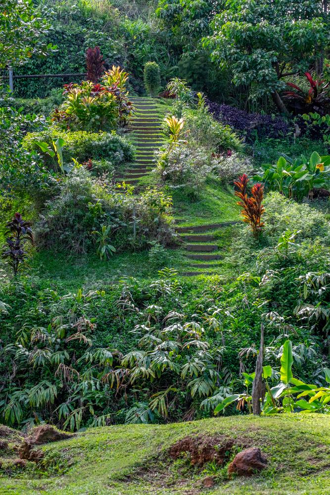 Princeville Botanical Garden, Princeville, Kauai, Hawaii