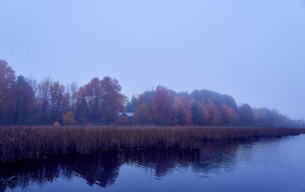 Mer Bleue Bog on a foggy day.