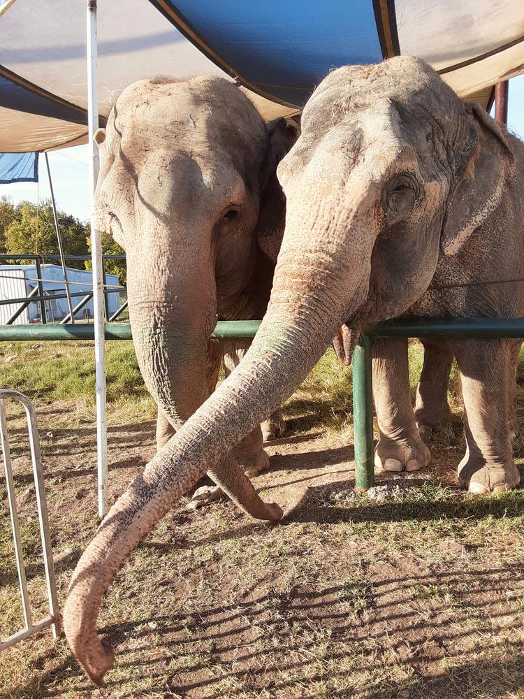 Endangered Ark Foundation's Asian Elephants