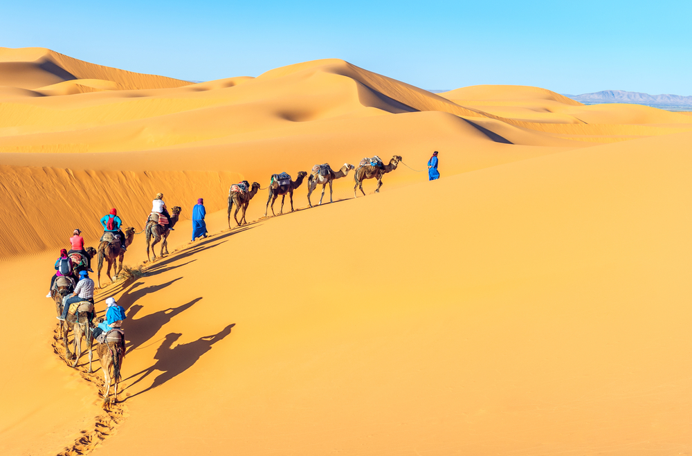 Camel caravan, Sahara Desert, Morocco.