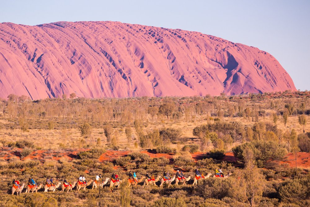Majestic Uluru and a camel tour on a clear winter's evening sunset in the Northern Territory, Australia