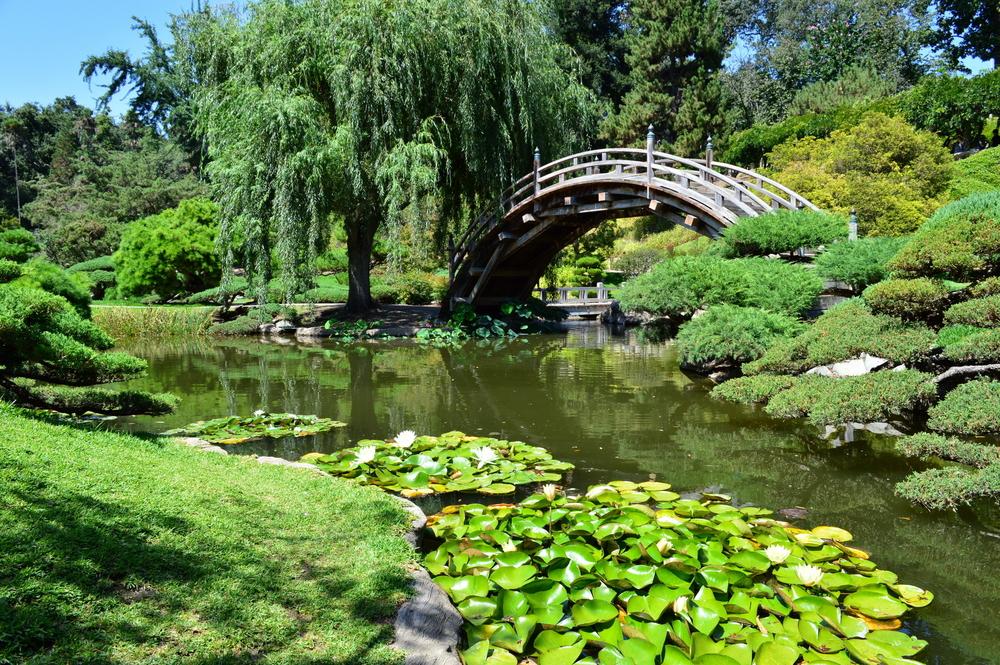 Beautiful, gorgeous landscapes in Huntington's Japanese Garden. San Marino, California.
