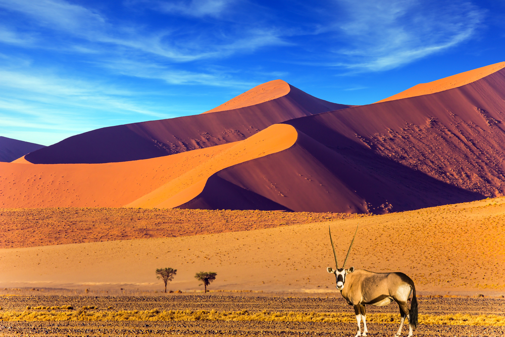 Oryx in the Namib Desert, Namibia.