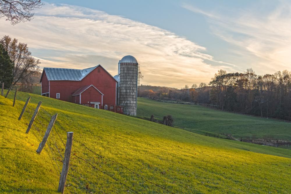 November Golden Hour At Ochs OrchardOchs Orchard is a three generation family farm in Warwick, NY.