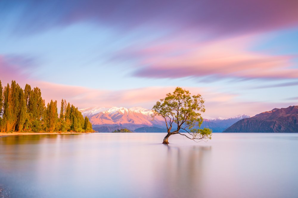 That Wanaka Tree at sunrise snowcapped mountains in background Wanaka, NEW ZEALAND one of the best international small towns